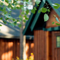 cabins-through-tree