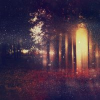 Abstract and mysterious background of blurred forest. Filtered image. Halloween concept